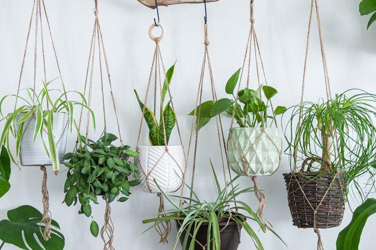 Ilustrasi tanaman hias gantung.