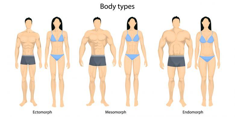 Ilustrasi bentuk tubuh