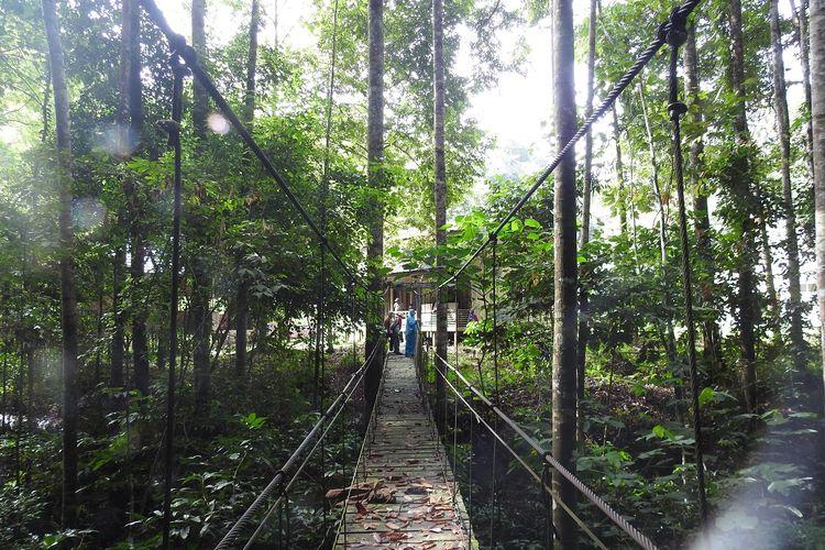 Hutan di KEE Wehea-Kelay, Kalimantan Timur.