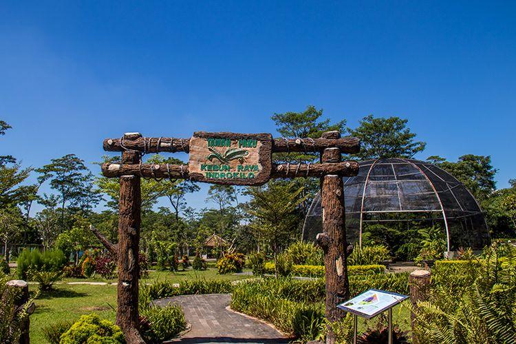 Taman Paku di Kebun Raya Indrokilo, Boyolali.