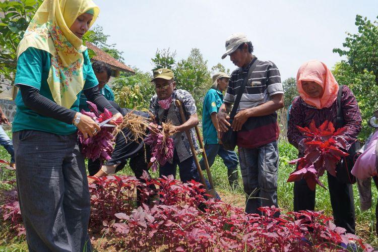 Anggota Perkumpulan Penyandang Disabilitas Indonesia (PPDI) Kabupaten Banyumas, Jawa Tengah mengikuti pelatihan dasar budidaya sayur-mayur di Experimental Farm (Exfarm) Fakultas Pertanian Universitas Jenderal Soedirman (Unsoed) Purwokerto, Jumat (5/10/2018).