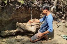 Warga Blora Lakukan Penyelamatan Fosil di Tepi Sungai Kapuan, Ini Temuannya