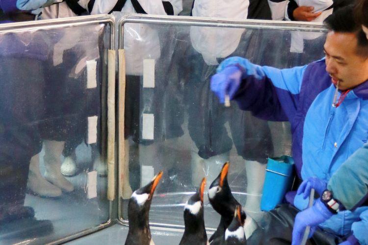 Pelatih penguin memberikan arahan sebelum bertemu penguin dalam program Encounter Penguin di Ocean Park Hongkong.