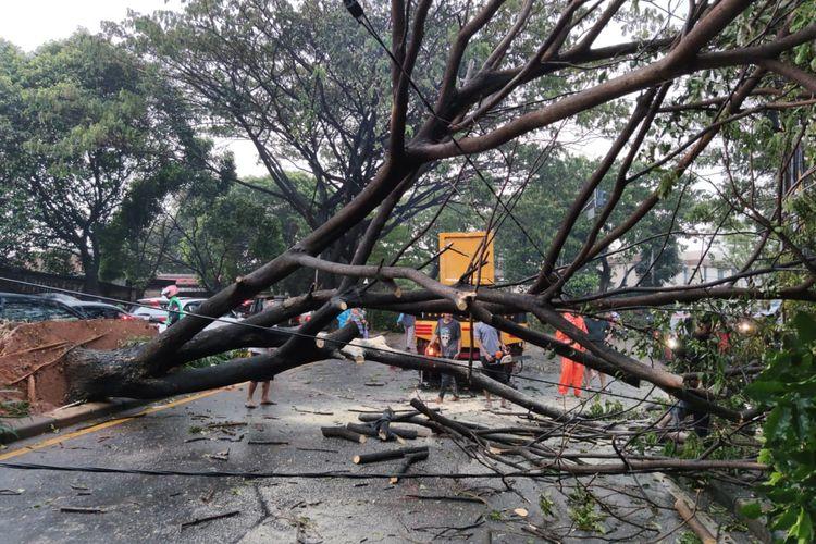 Salah satu pohon yang tumbang di Jalan Juanda, Depok, Jawa Barat pada Sabtu (22/5/2021) imbas hujan lebat dan angin kencang.