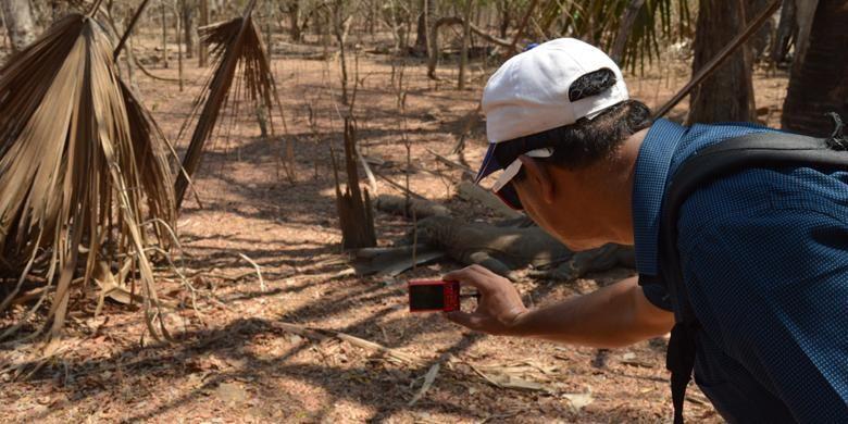 Wisatawan mancanegara asal India memotret satwa endemik komodo (Varanus Komodoensis) di Pulau Komodo, Kecamatan Komodo, Manggarai Barat, Nusa Tenggara Timur, Kamis (19/11/2015).