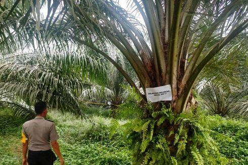 Ada Semburan Gas dan Lumpur Setinggi 7 Meter di Aceh Timur, Warga Dilarang Melintas