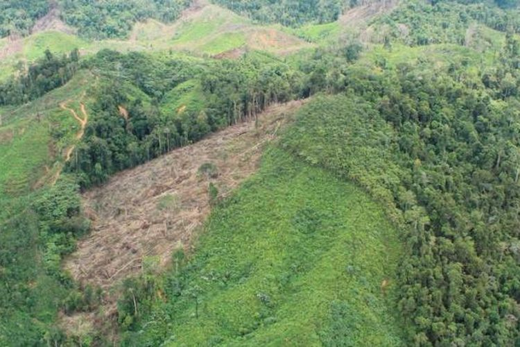 Ilustrasi: Pembalakan hutan.