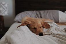 Serba-serbi Hewan: Seperti Manusia, Anjing juga Bermimpi