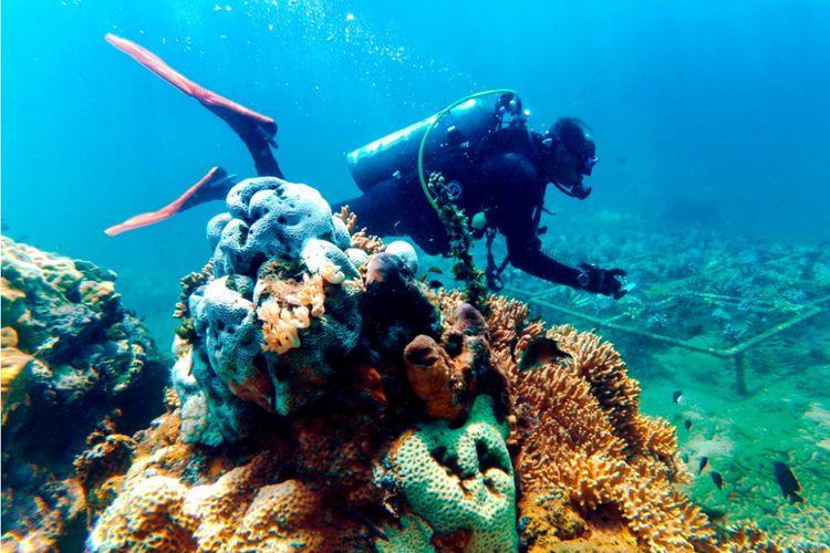 Kabupaten Banyuwangi menggelar Banyuwangi Underwater Festival di Pantai Bangsring, Kecamatan Wongsorejo, Banyuwangi, Jawa Timur. Festival akan berlangsung selama tiga hari, Kamis - Sabtu (4-6 April 2018).