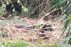 Terjerat Perangkap, Beruang Madu Dievakuasi ke Hutan Lindung Pasaman