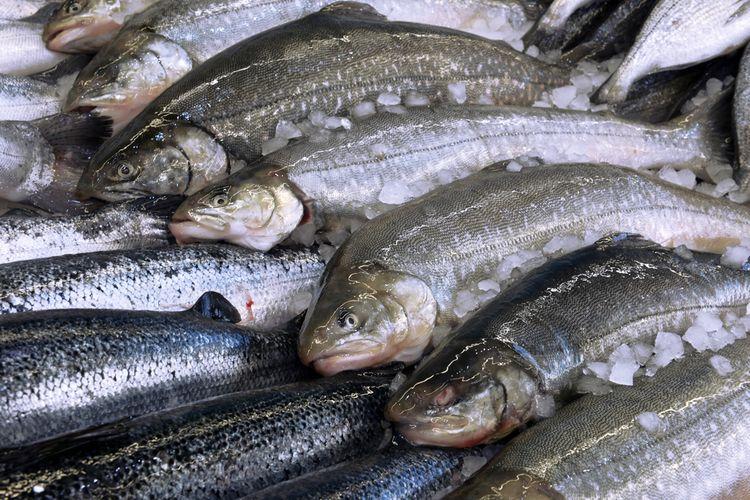 Ilustrasi ikan salmon di pasar