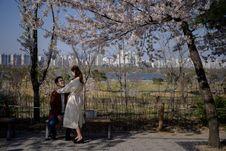 Sakura Bermekaran