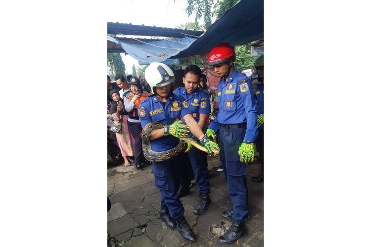 Petugas Sudin PKP Jakarta Timur evakuasi seekor Ular Sanca Batik sepanjang 3 meter yang berkeliaran di dalam rumah warga, Jalan TB. Simatupang, Kelurahan Susukan, Ciracas, Jakarta Timur, Rabu (22/1/2020).