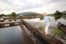 Puluhan Ton Ikan Nila di Keramba Jala Apung Sungai Tamiyang Kalsel Mati Mendadak