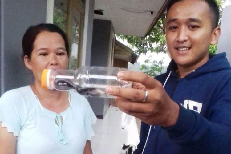 Seorang warga di Kabupaten Cianjur, Jawa Barat, memperlihatkan seekor ular kobra yang berhasil ditangkapnya, Jumat (20/12/2019). Dalam dua pekan terakhir warga telah menemukan 17 ekor reptil berbisa itu.