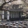 Walau Tempat Wisata Mulai Buka, Korea Belum Terima Turis Asing