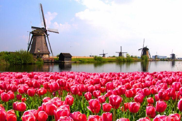 Kuliah ke negeri dongeng seperti Belanda kini bukan angan-angan belaka dengan pilihan berbagai beasiswa yang ada.