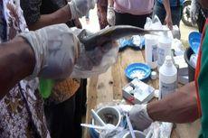 Licinnya Jejaring Perdagangan Ikan Asin Berformalin...