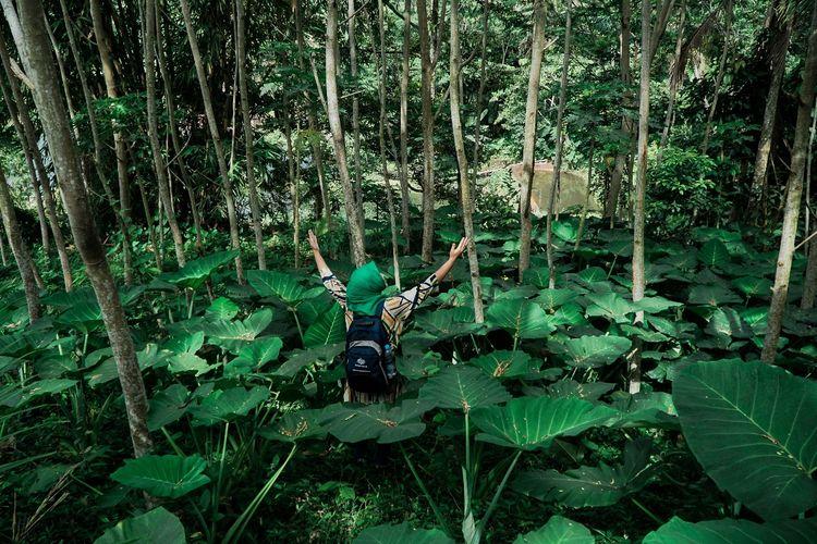 Tempat wisata bernama Tereng Kuning di Kabupaten Lombok Tengah, Nusa Tenggara Barat (dok. GoMandalika.com | Dinas Pariwisata dan Kebudayaan Lombok Tengah)