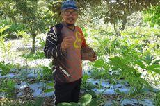 Cerita Heri 4 Tahun Jadi Petani Porang, Raup Ratusan Juta Tiap Panen dan Bisa Kendalikan Harga