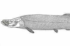 Balai Karantina Amankan 36 Ikan Berbahaya di Jawa Tengah