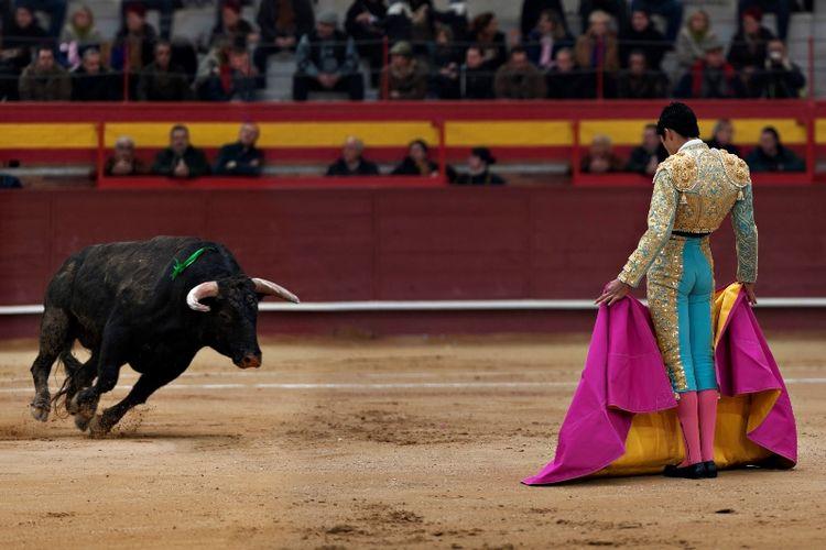Ilustrasi Matador dalam sebuah adu banteng.