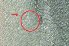 Heboh, Google Maps Tampakkan Buaya Panjang 15 Meter di Nunukan