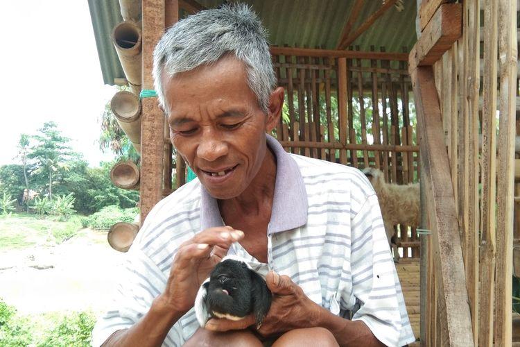 Udi (62), warga Dusun Jatimulya, RT 002, RW 004, Desa Sukaharja, Kecamatan Telukjambe Timur, Kabupaten Karawang, memperlihatkan dombanya yang bermata satu, Minggu (27/12/2020).