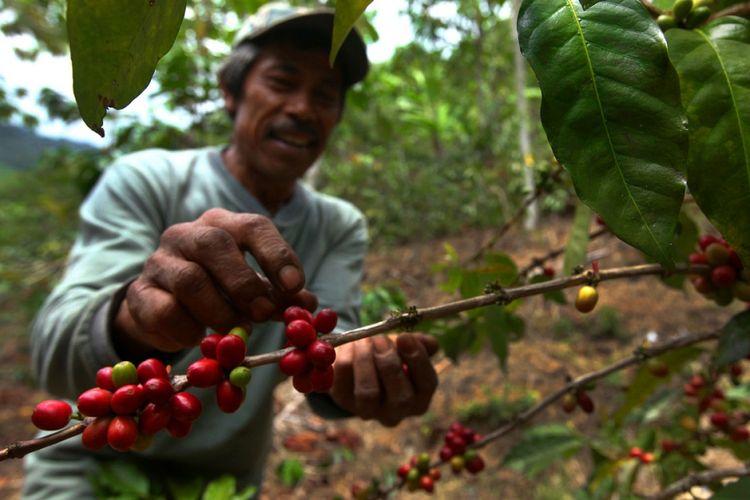 Pendapatan warga Desa Cupunagara, Kecamatan Cisalak, Kabupaten Subang, Jawa Barat. meningkat sejak membudidayakan kopi arabika. Petani menjual kopi melalui BUMDes yang kemudian memberi merk Kopi Canggah.
