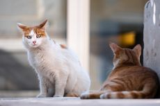 Yuk, Cari Tahu Tempat Sterilisasi Kucing Secara Gratis