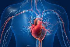 Studi: Jantung Perempuan Lebih Rentan Dibanding Pria, Ini Maksudnya