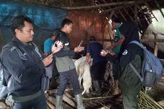 79 Hewan Ternak Mati akibat Banjir Bandang Bondowoso