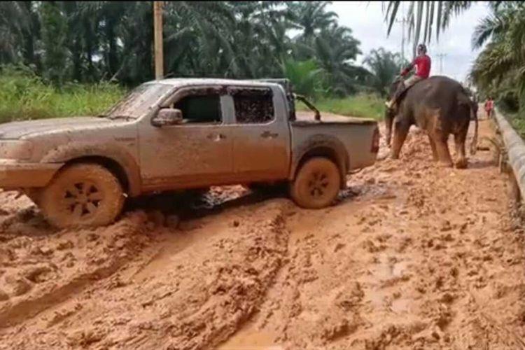 Seekor Gajah menarik sebuah mobil yang terperosok di jalan berlumpur di Kabupaten Bengkalis, Riau. Screenshot video WhatsApps.