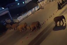Kawanan Gajah Liar Kabur dari Cagar Alam dan Serbu Jalanan Kota di China