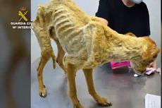 Ditemukan Puluhan Anjing Kurus Kering Terlantar di Peternakan Spanyol