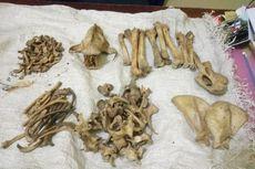 Polisi Pun Menyamar demi Tangkap Penjual Tengkorak dan Tulang Harimau Sumatera