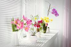 10 Tanaman Hias Bunga Cantik Beraneka Warna, Cocok Jadi Dekorasi Rumah