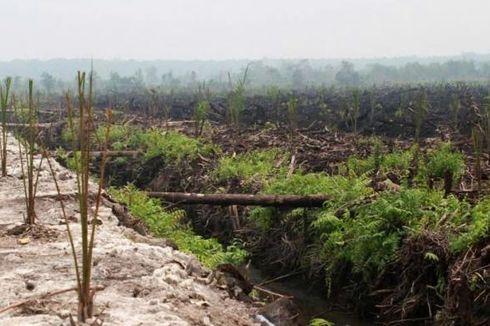 Rehabilitasi 2 Juta Hektar Lahan Gambut Butuh Rp 50 Triliun