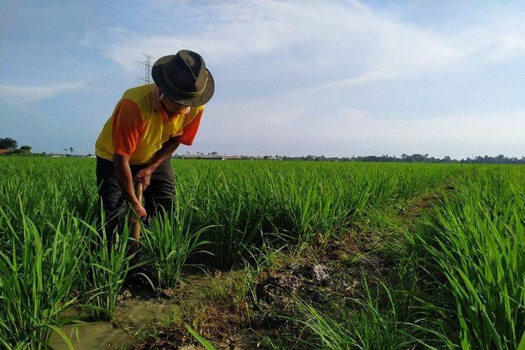 Para petani yang tetap semangat berjuang di garda terdepan menjaga ketahanan dan kedaulatan pangan nasional di tengah pandemic.