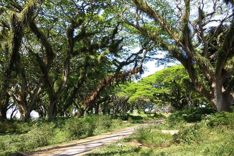 Pemandangan yang bisa dilihat di Hutan De Jawatan yang terletak di Desa Benculuk, Kecamatan Cluring, Kabupaten Banyuwangi, Jawa Timur sekitar 45 kilometer dari pusat kota Banyuwangi.