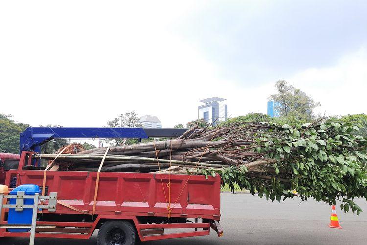 Contoh pohon pengganti di Monas dan Thamrin akibat pengerjaan proyek MRT Fase 2A. Foto diambil pada Selasa (11/8/2020)