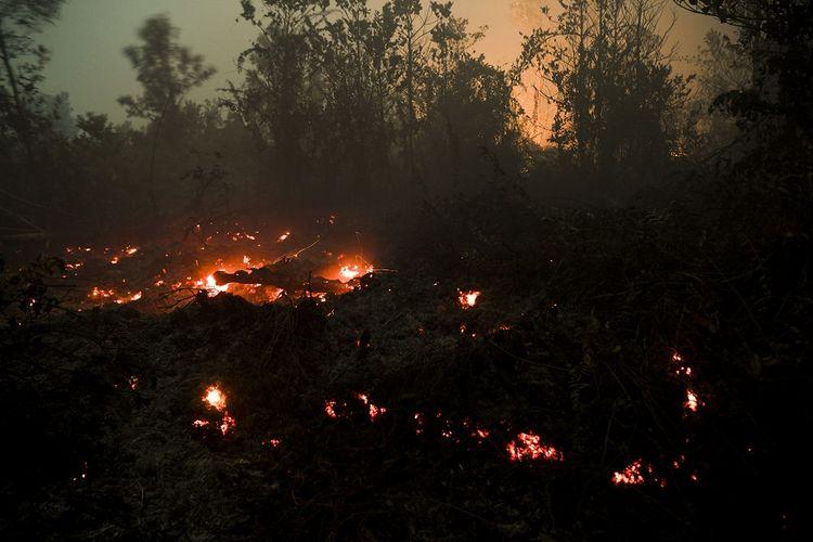 Api mambakar lahan milik warga di Palangka Raya, Kalimantan Tengah, Minggu (22/9/2019) dini hari. Pemerintah Provinsi Kalimantan Tengah menetapkan status tanggap darurat bencana kebakaran hutan dan lahan (Karhutla) hingga 30 September 2019. ANTARA FOTO/Hafidz Mubarak A/ama.