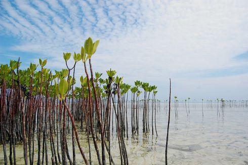 Luhut: Perkembangan Rehabilitasi Mangrove Dipantau selama Sepekan Ini