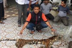 Perdagangan Kulit Harimau Sumatra Terkuak, Harga Selembar Rp 80 Juta
