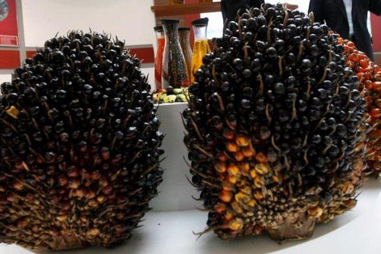 Tandan buah segar (TBS) kelapa sawit dipamerkan di salah satu stan peserta International Conference and Exhibition on Palm Oil 2013 di Jakarta Convention Center, Jakarta, Selasa (7/5/2013).