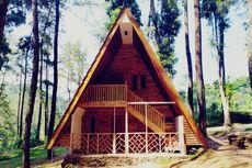 Sikembang Park di Batang, Wisata Selfie di Tengah Keasrian Hutan Pinus