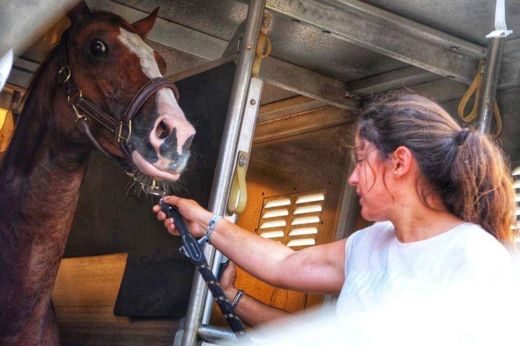 Satu pekan jelang perhelatan Asian Games XVIII tahun 2018 digelar, 17 ekor kuda peserta cabang olah raga equestrian asal kota Liege, Belgia mendarat di Bandara Soekarno-Hatta, Sabtu (11/8/2018)