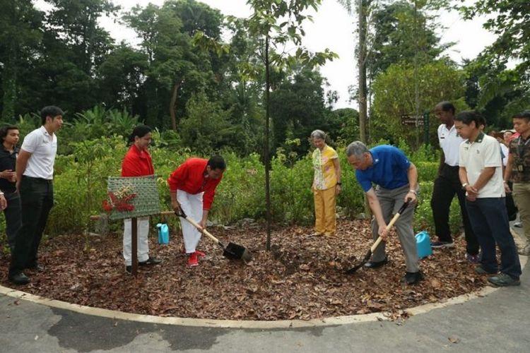 """Presiden Indonesia Joko Widodo dan Perdana Menteri Singapura menanam menanam pohon Oak Sunda Mempening, Pasang Batu  yang dilabeli sebagai """"Rising Tree"""" di Kebun Raya Singapura, Kamis pagi (7/9)"""