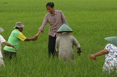 Wawancara Khusus: Sektor Pangan, Fokus Pemerintahan Jokowi