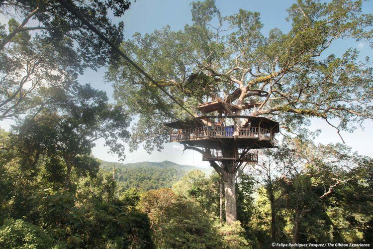 Seluruh rumah pohon tersebut dibuat dari kayu yang direklamasi.
